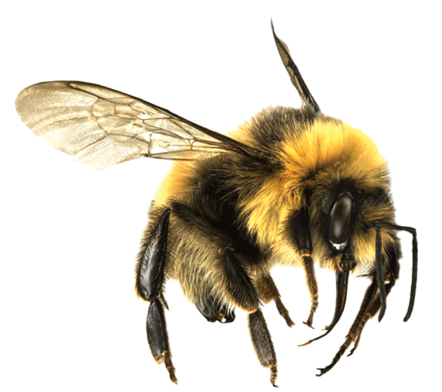 Bees transparent clear background. Blog admin darkened not