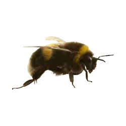 Bees transparent clear background. List of synonyms and