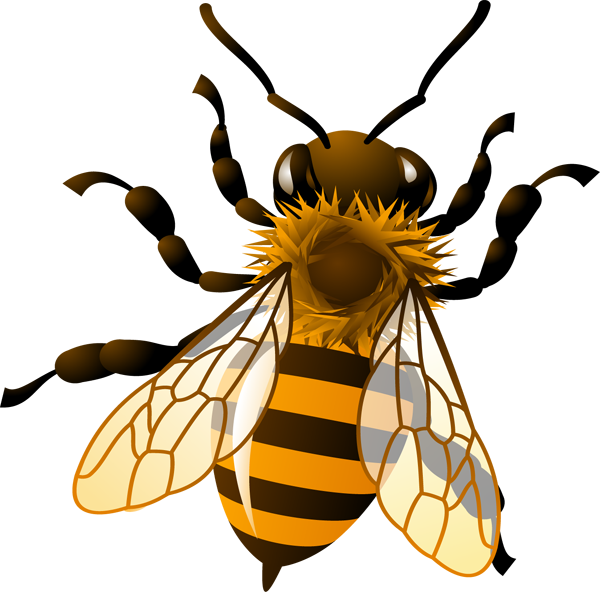 Gallery for honey bee. Bees transparent graphic transparent