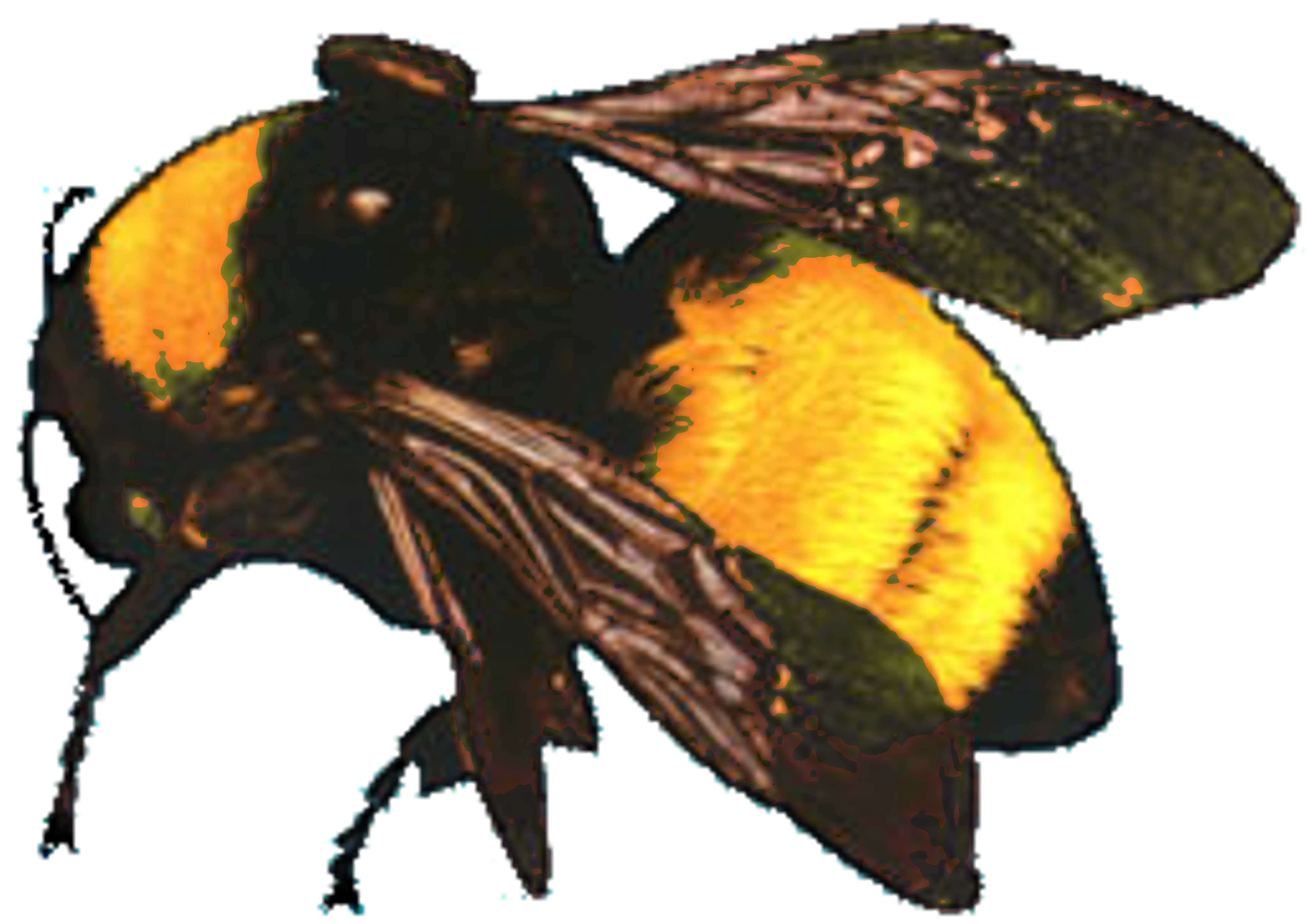 Bees transparent flower boy. Who dat odd future