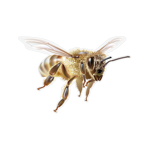 Bees transparent flying. Printed vinyl bee stickers