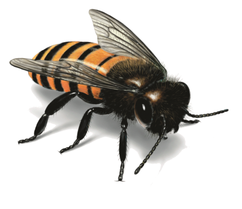 Bees transparent isolated. Bee sixteen stock photo