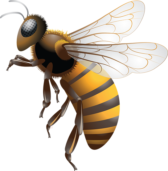 Bees transparent killer. Bee inc and maintained