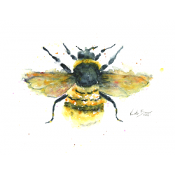 Bees transparent watercolor. Butterflies and insects bumble
