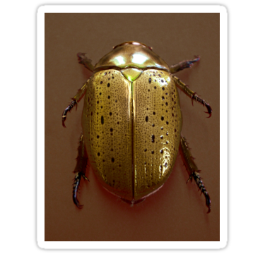 Beetle transparent shiny gold. Christmas sticker by stickernuts