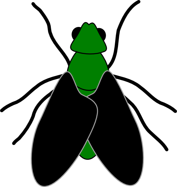 bugs vector beetle