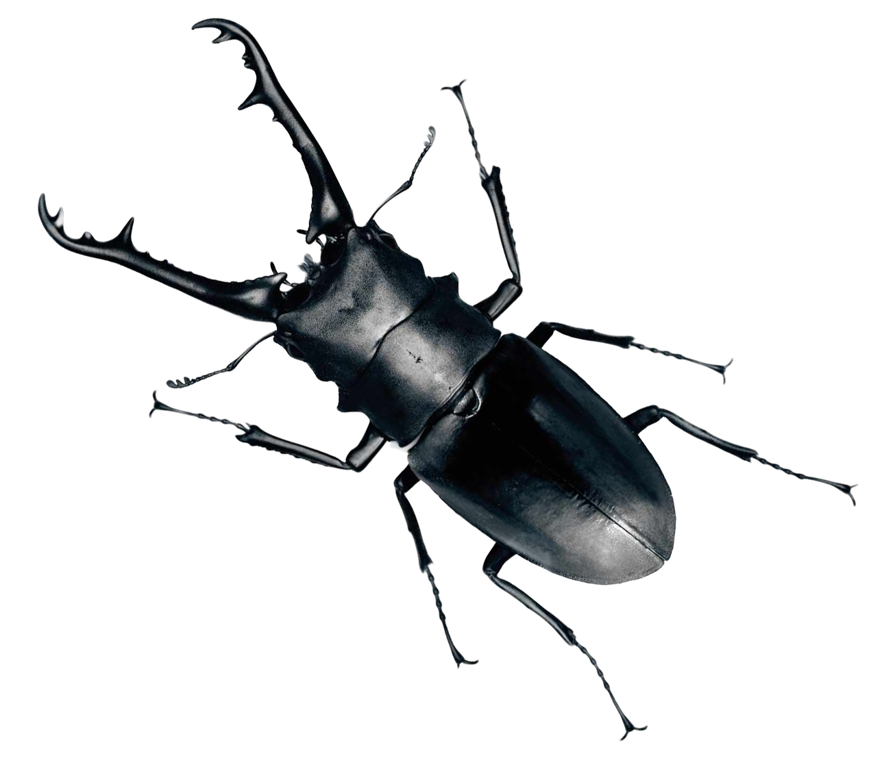 Png image purepng free. Beetle transparent bug picture free download