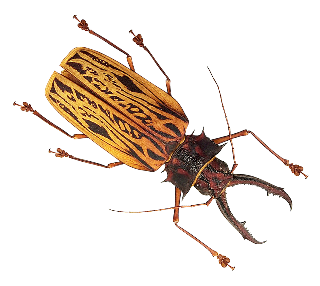 Vector insects different. Insect png transparent images