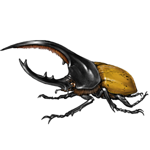 Lioden dynastes hercules found. Beetle transparent translucent graphic freeuse library