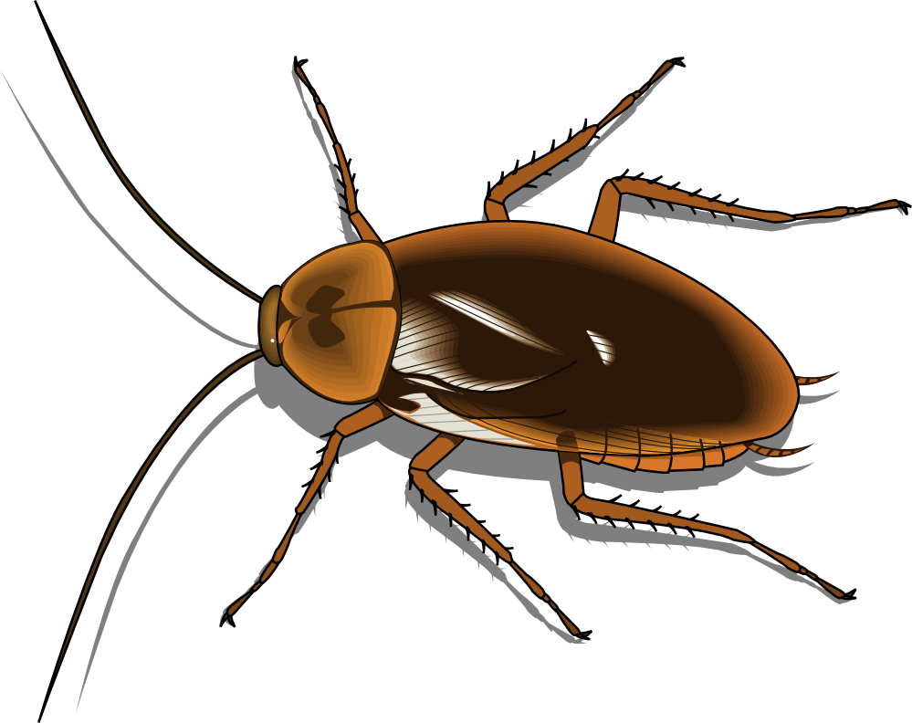Insect png images all. Beetle transparent translucent jpg library download