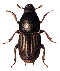 Png images all. Beetle transparent clipart free library