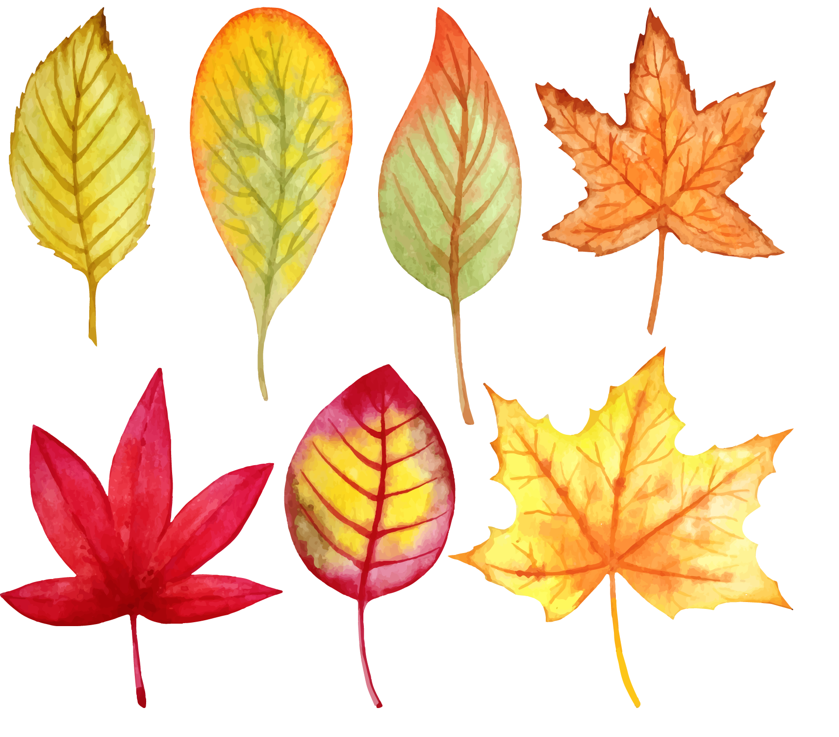 Leave vector watercolor. Leaf painting autumn leaves