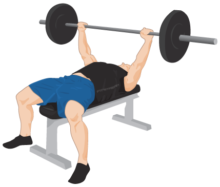 Bench press png. Exercise guide tips weight