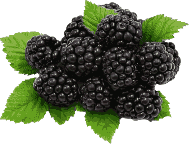 Berry clipart blackberry. Free black berries cliparts