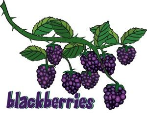 Berry clipart blackberry. Image gresh juicy blackberries