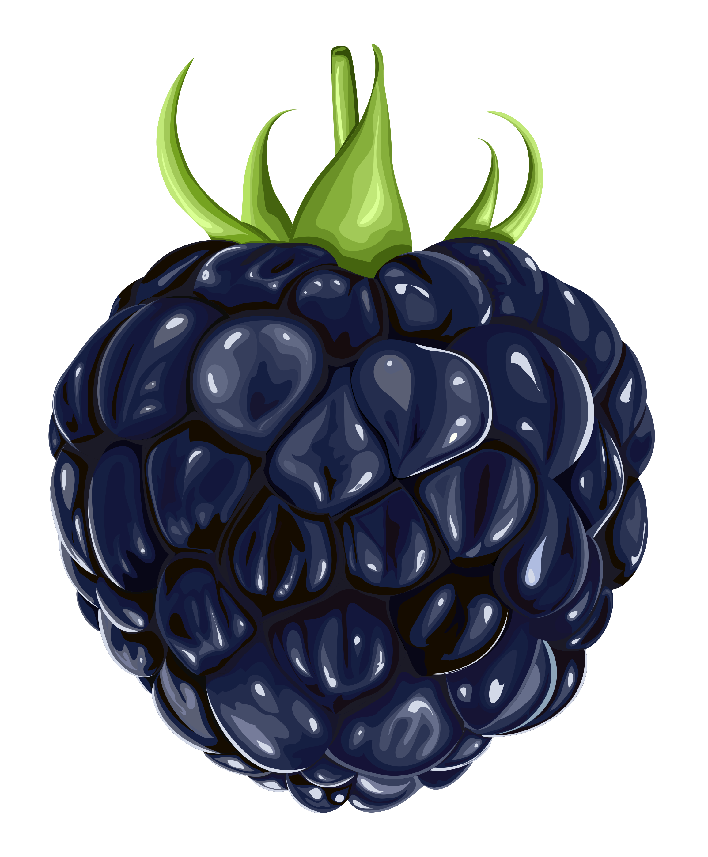 Berry clipart blackberry. Free