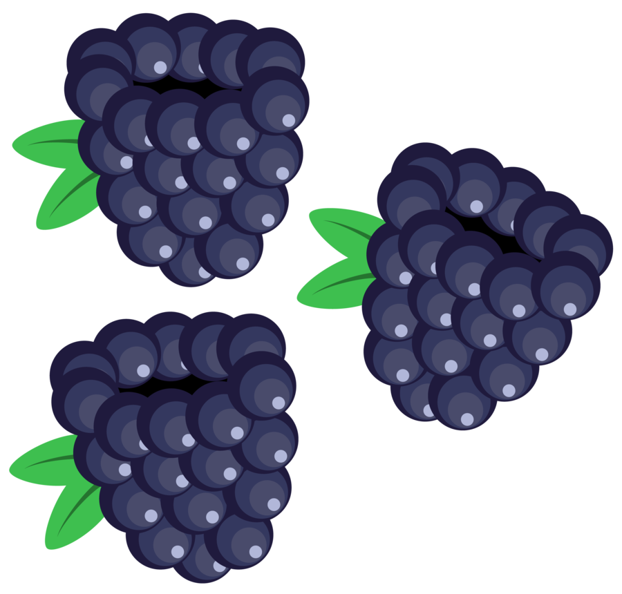 berry vector blackberry