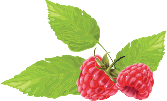Berry vector rasberry. Great clip art of