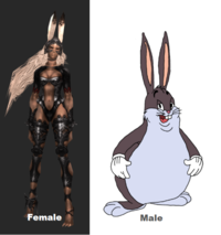 Big chungus png giant. Know your meme female