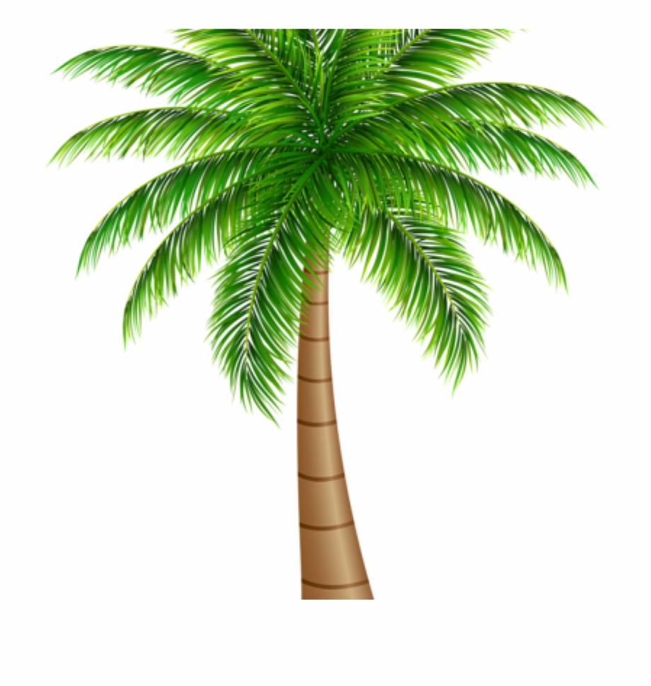 Big coconut. Download for free png