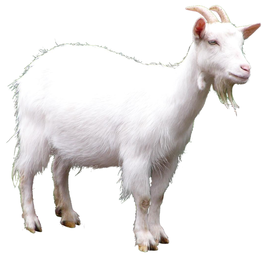 Billy goat png. Hd transparent images pluspng