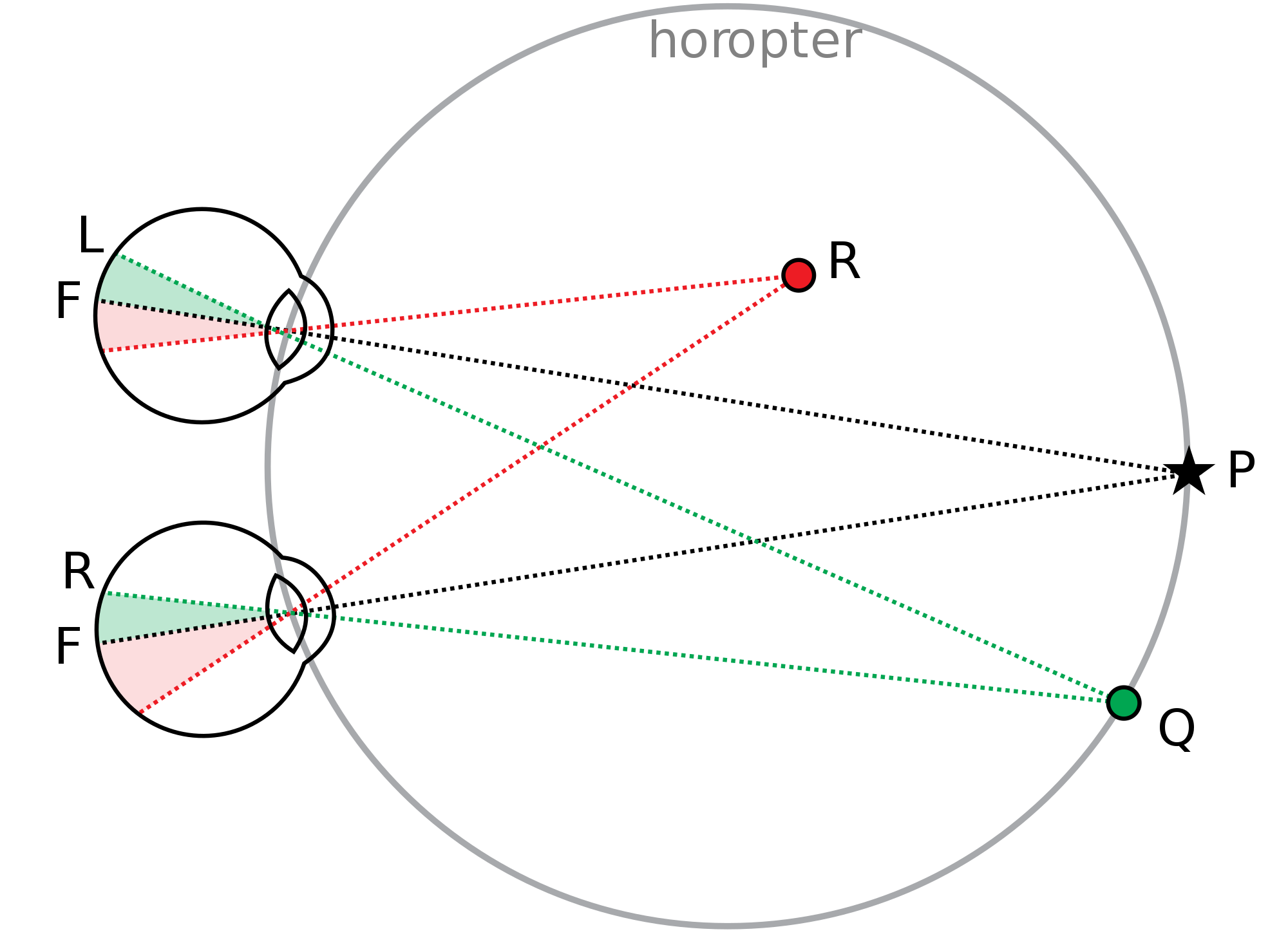 Binocular vision png. File svg wikimedia commons