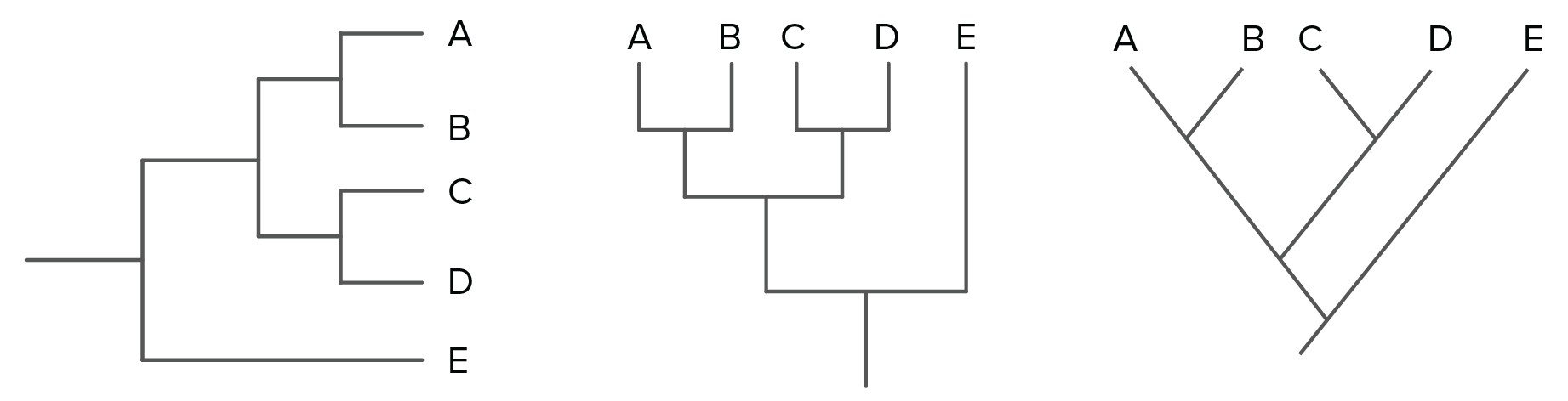 Drawing methods tree. Phylogenetic trees evolutionary article