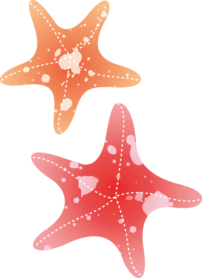 Drawing shells starfish. Watercolor painting transprent png