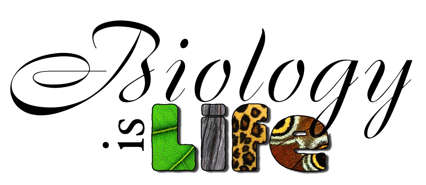 Biology clipart biology teacher. Collection of free abiogeny