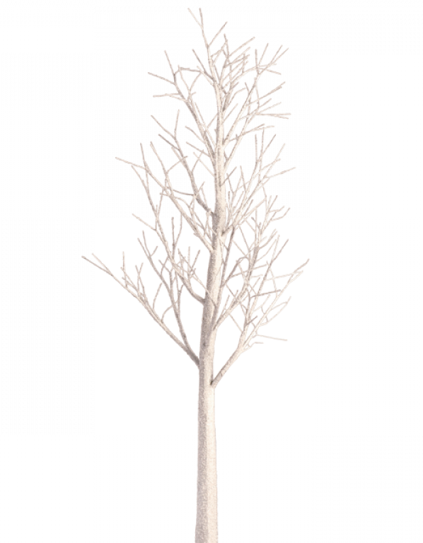 Winter trees png. White birch tree transparent