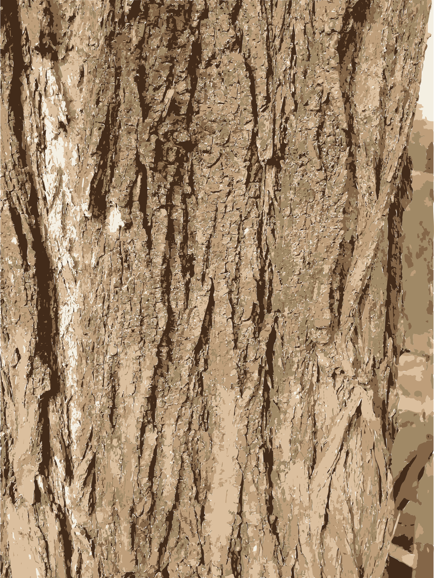 Birch log png. Tree bark texture icons