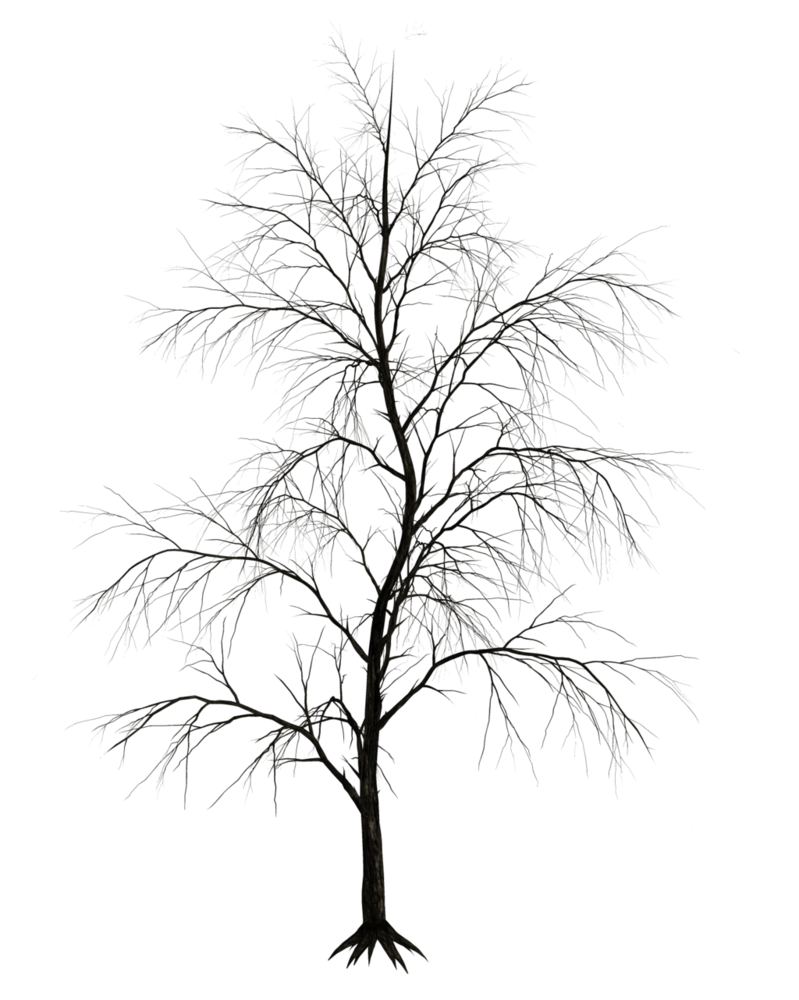 Birch tree in winter silhouette png. Dark trees stock by