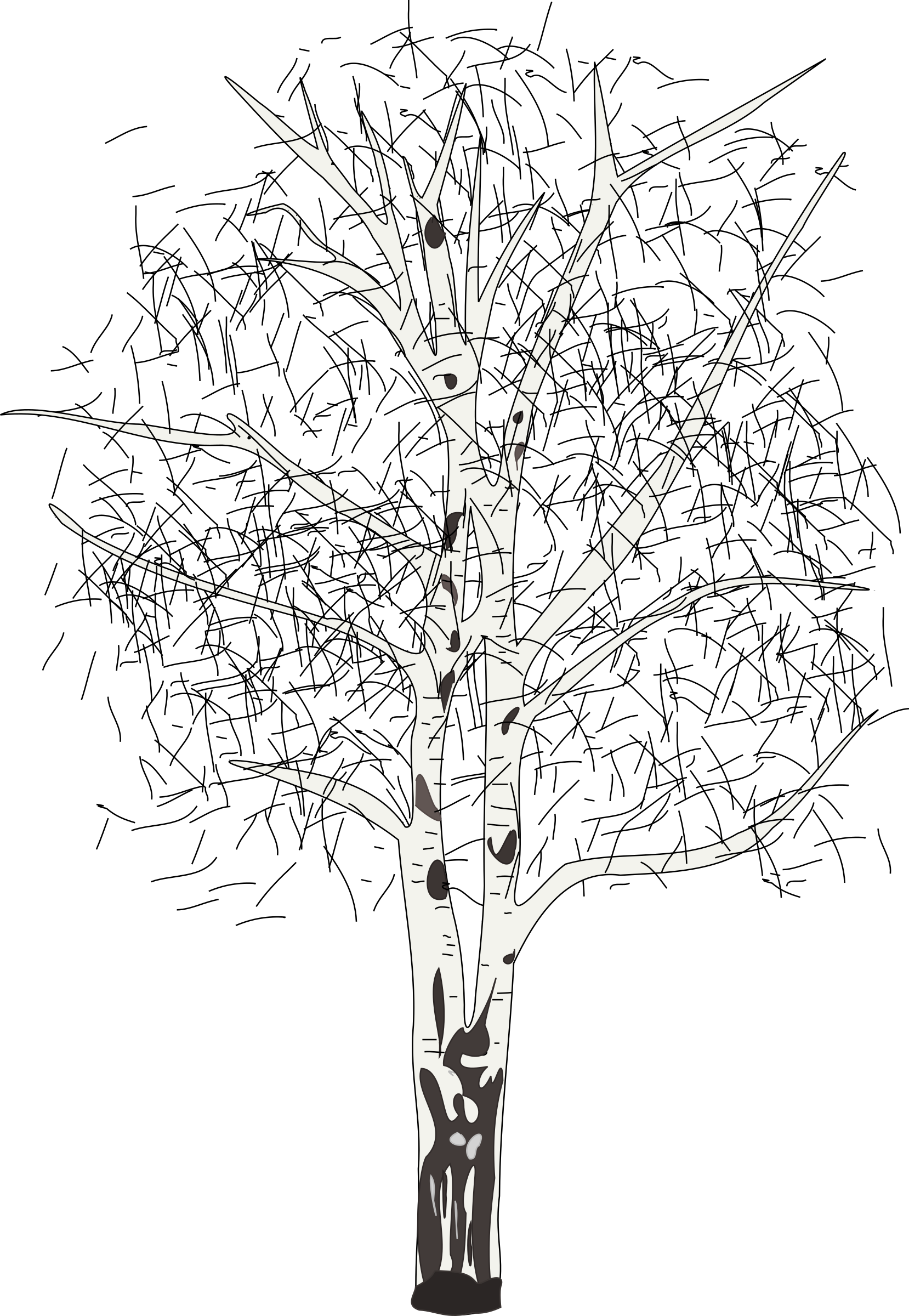 Birch tree in winter silhouette png. Leafless icons free and