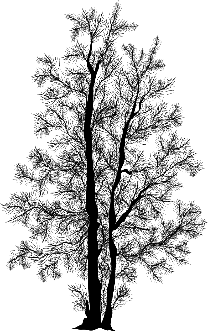Birch tree in winter silhouette png. Painting clipart illustration file