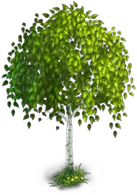 Birch tree png. Image legends rise of