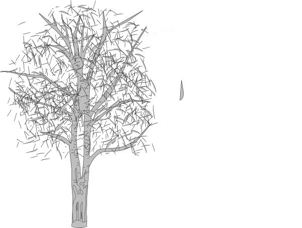 Birch tree png. White transparent images pluspng