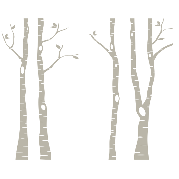 Birch trees png. White tree transparent images