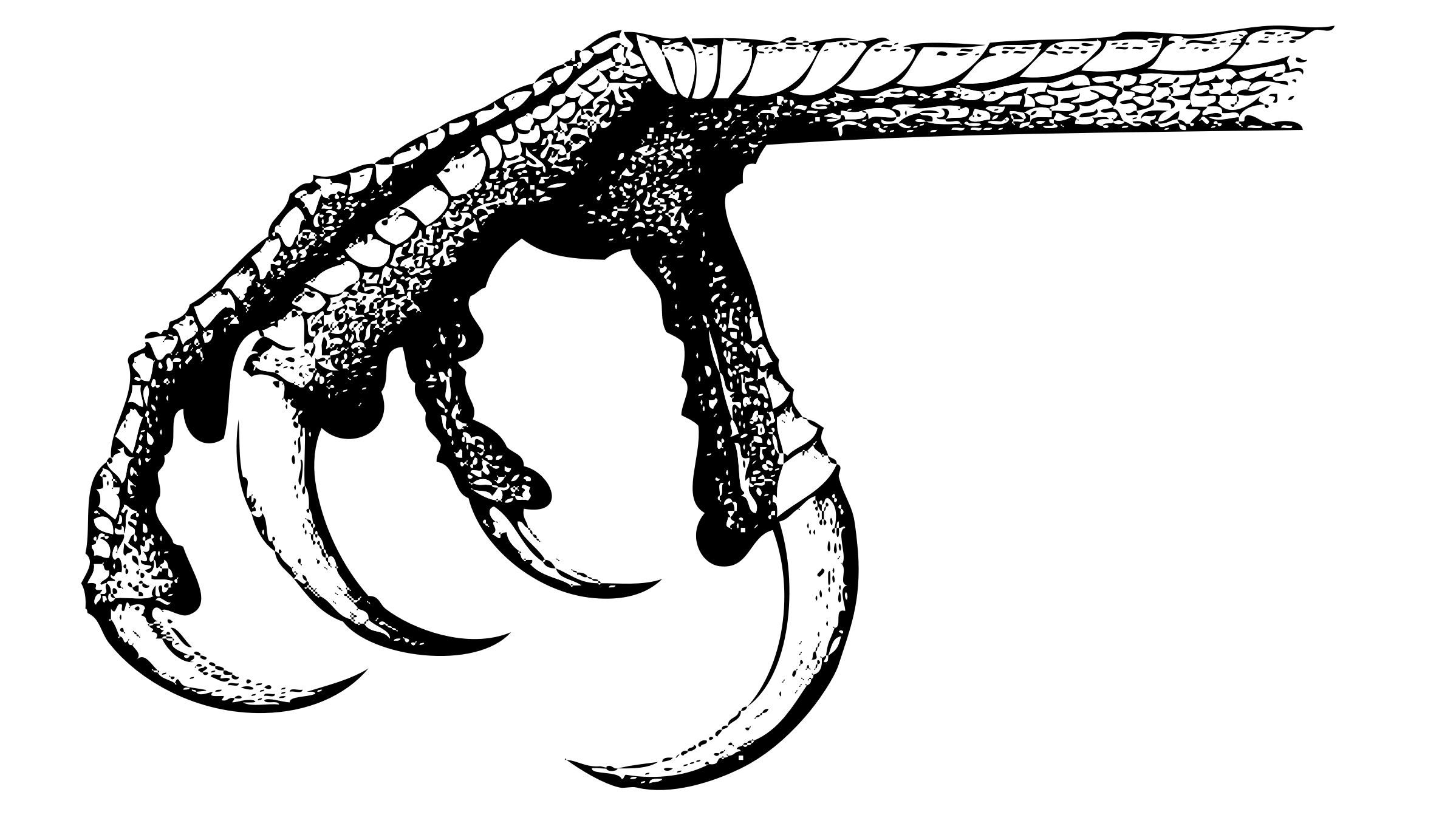 Bird claw. Png transparent images pluspng