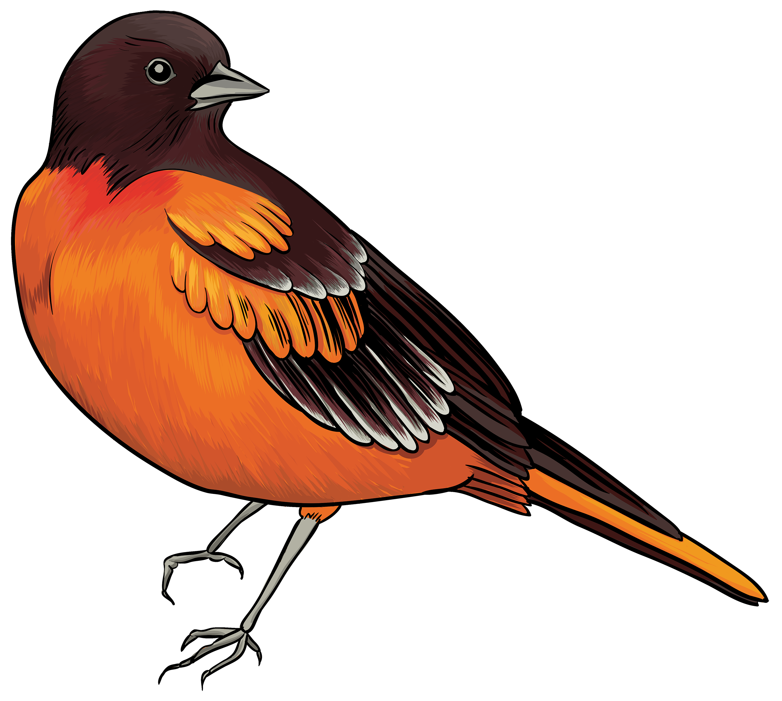 Bird clipart png. Black and orange best