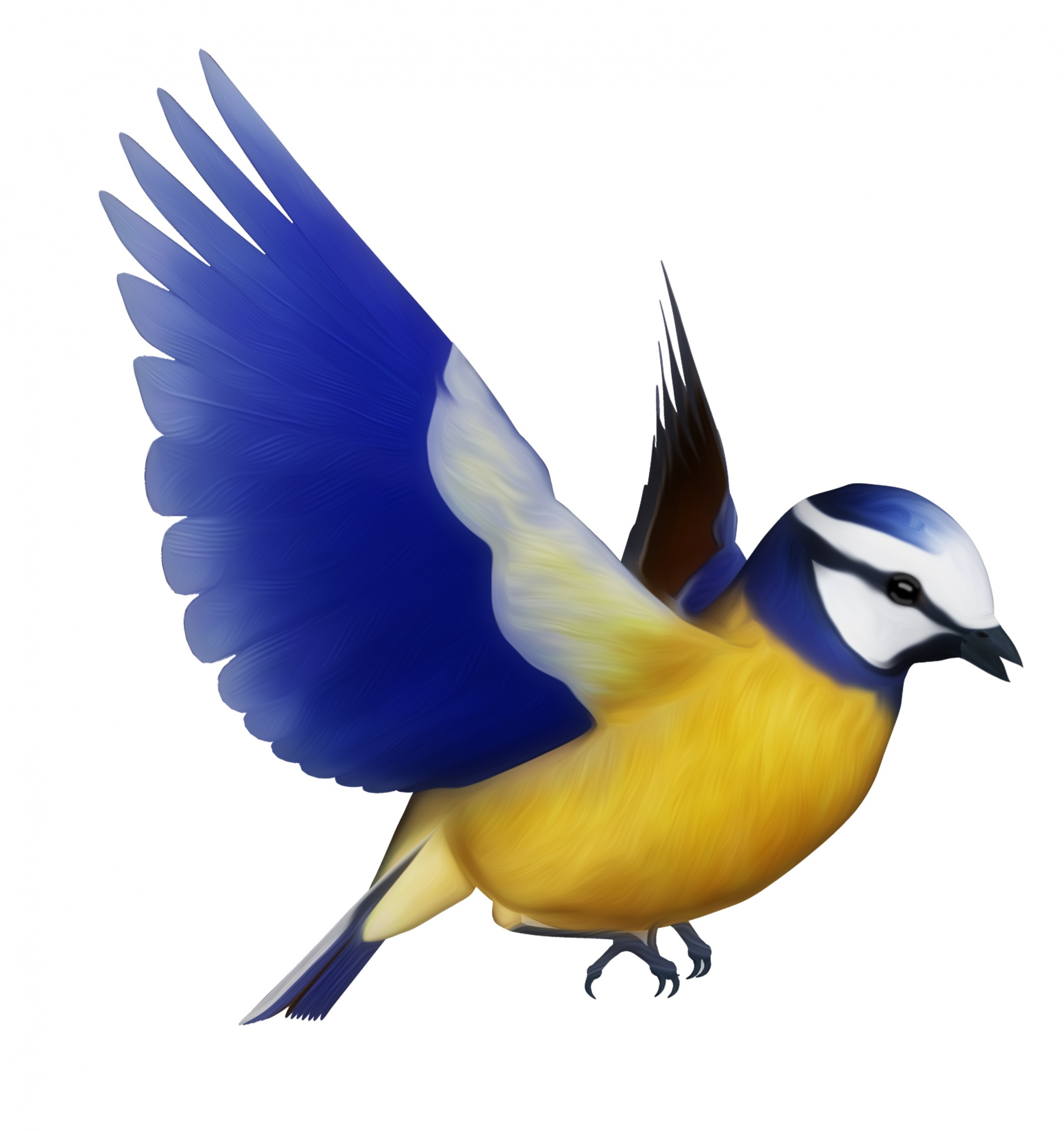 Public domain clipart bird. Blue tit free stock