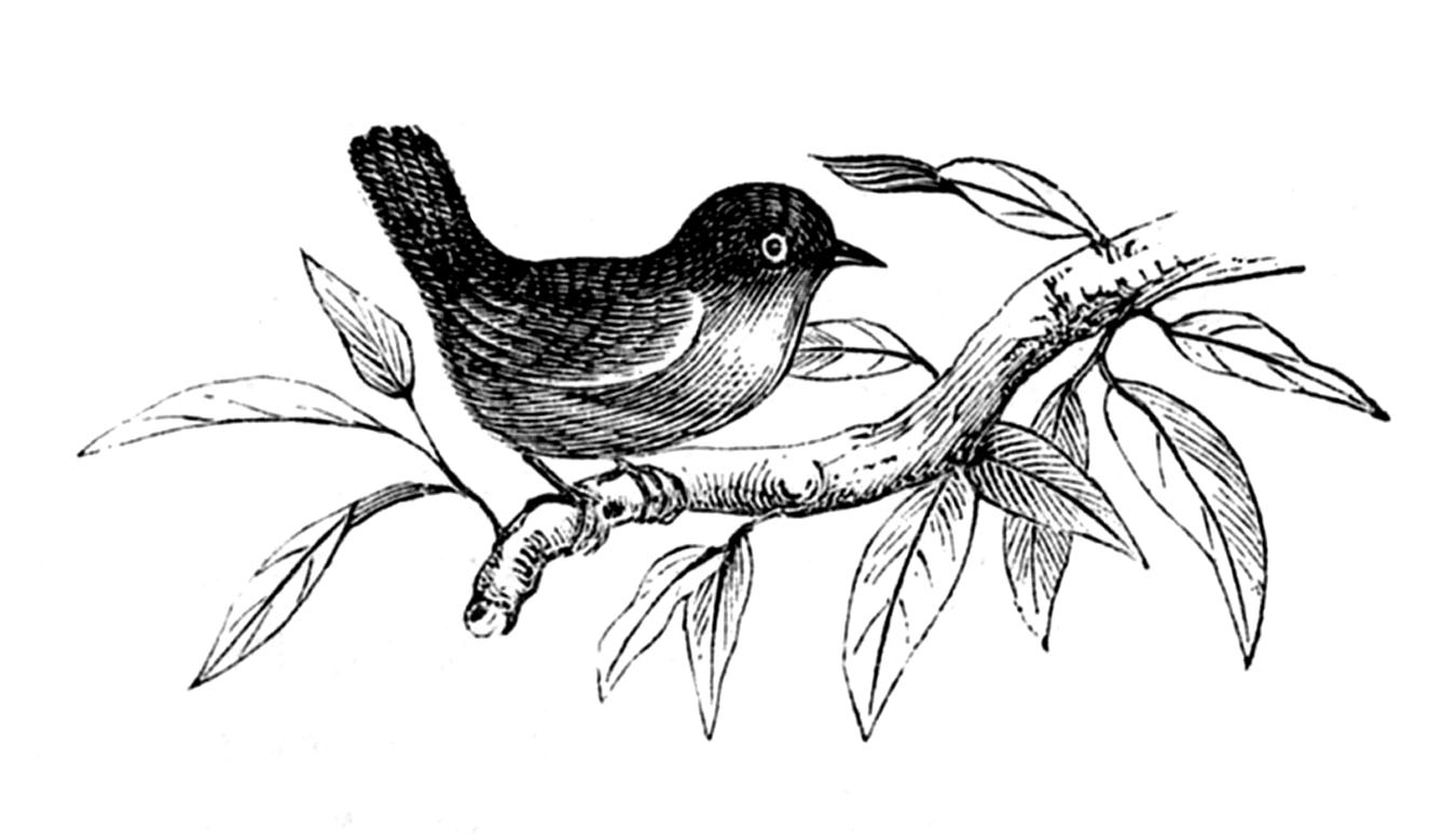 Bird clip art black and white. Spring graphics the fairy