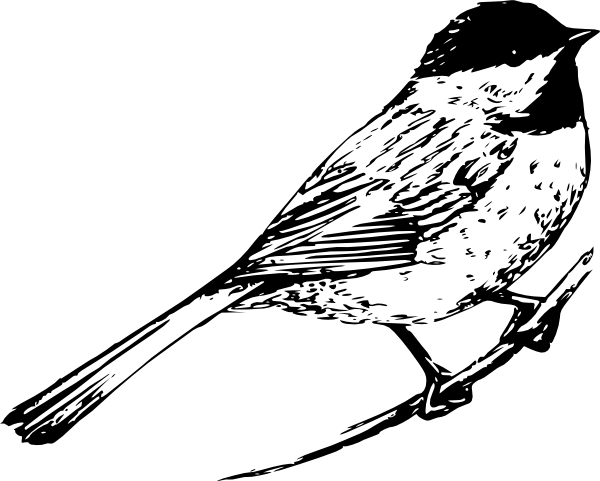 Social drawing bird. Black and white pictures