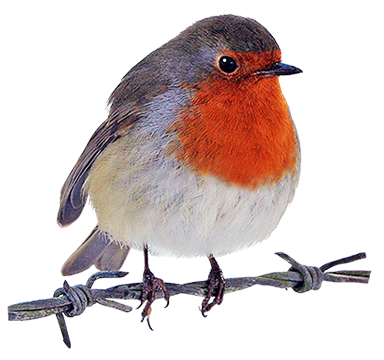 Robin clipart . Bird clip art realistic clip royalty free stock