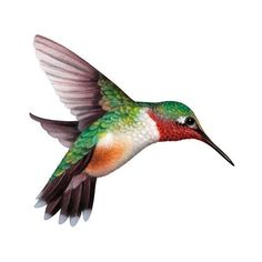 Bird clip art realistic. Colibr color birds pinterest