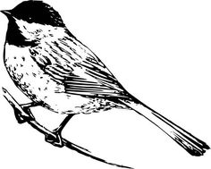 Bird clip art realistic. Black and white pictures
