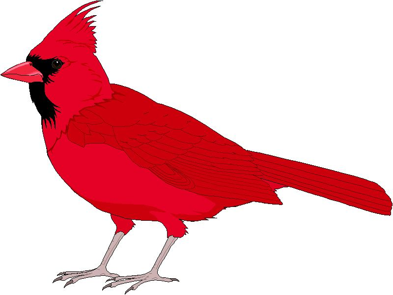 Bird clip art red bird. Cardinal silhouette at getdrawings