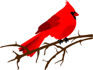 Bird clip art red bird. Illustration of a cardinal