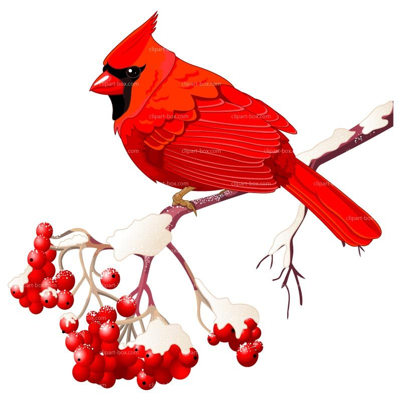 Bird clip art red bird. Free winter clipart royalty