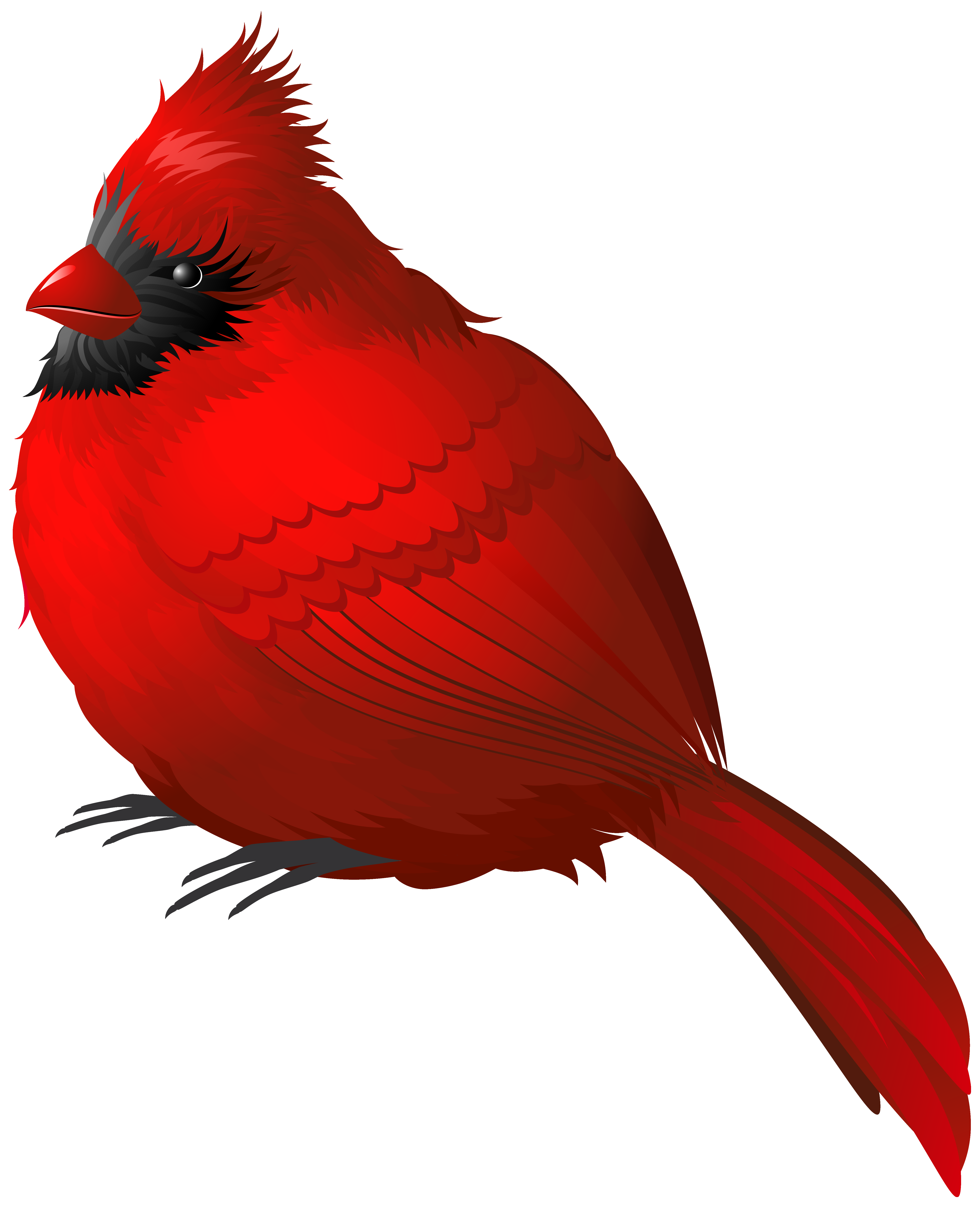 red bird png