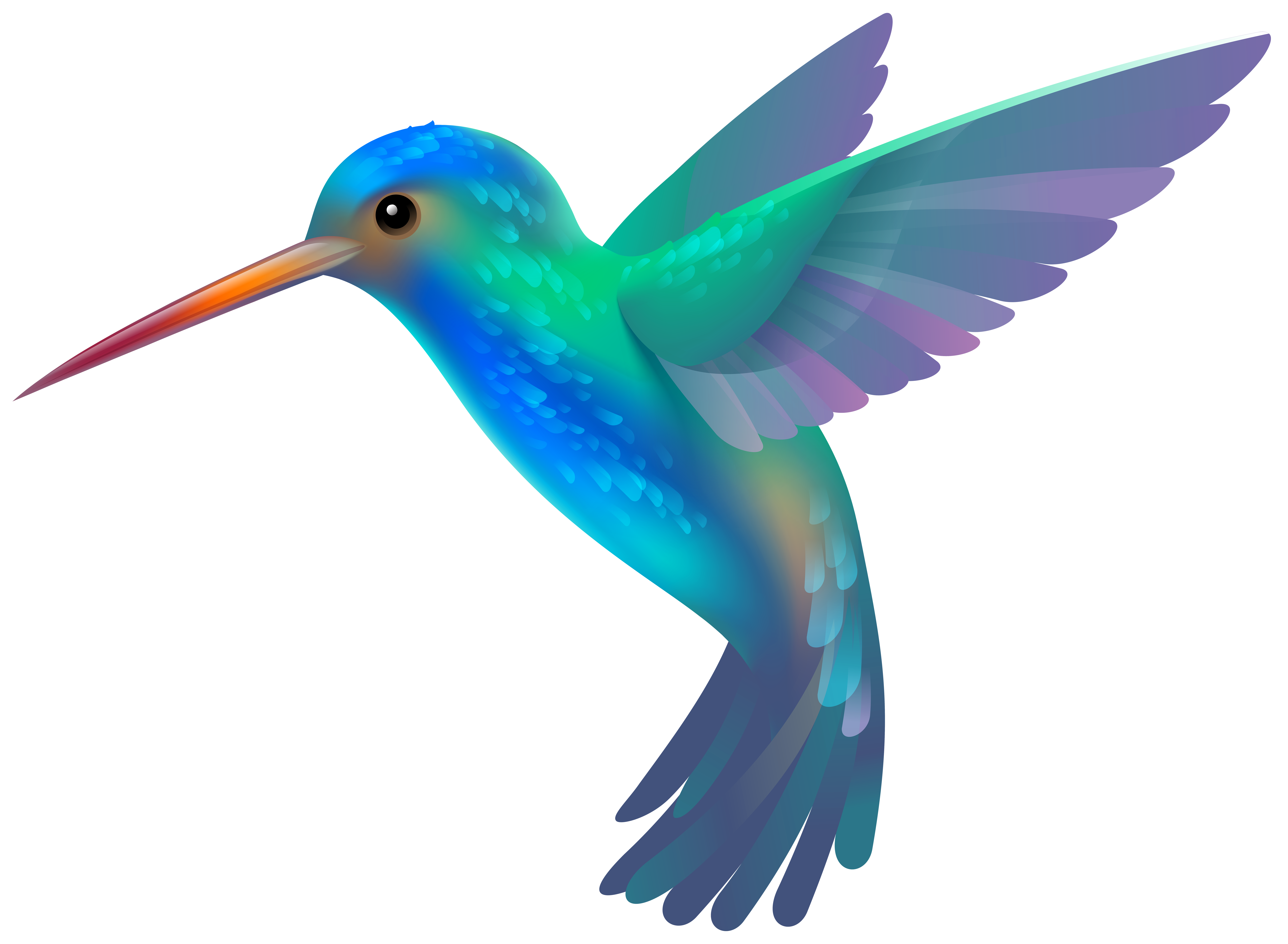 Png clip art image. Hummingbird transparent banner free library